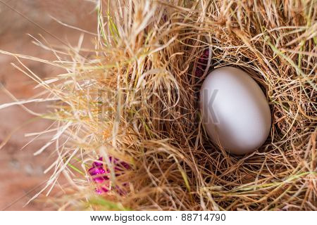 White Egg In The Hay