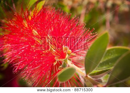 Red Flower, Andalusia, Spain