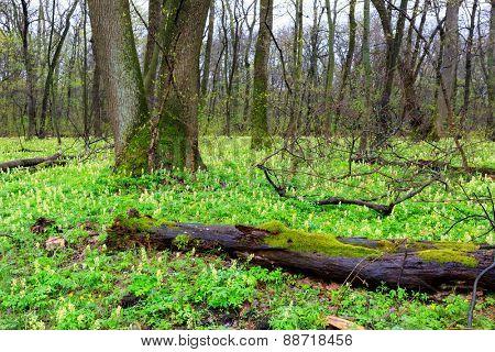 Nice wild flower meadow in deep spring forest