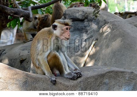 Little Monkey Sitting On The Rock Photo
