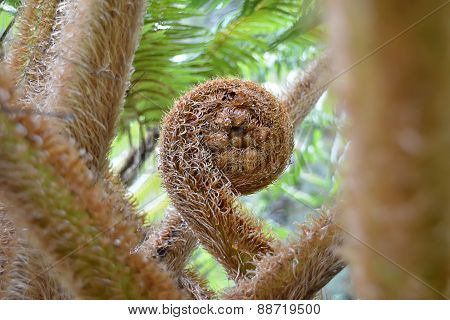 Giant Green Fern Plant In Nature Photo