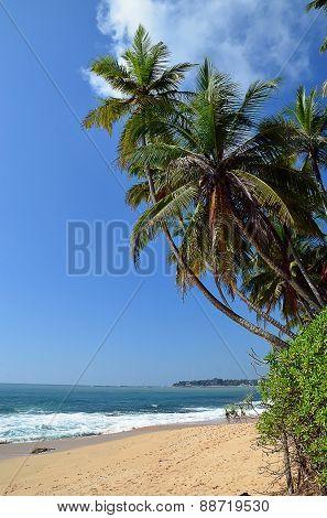 Palms On Sand Beach And Blue Sky By The Sea