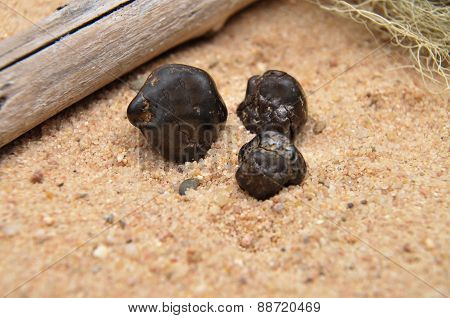 Tektite On Beach