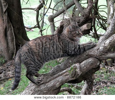 Tabby Cat Sharpening Claws On Tree