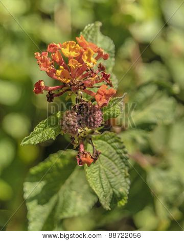 beautiful warm colors flower