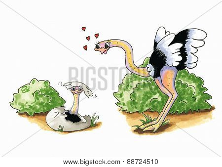 Cartoon of hand drawn Ostrich with young in egg isolated over white background