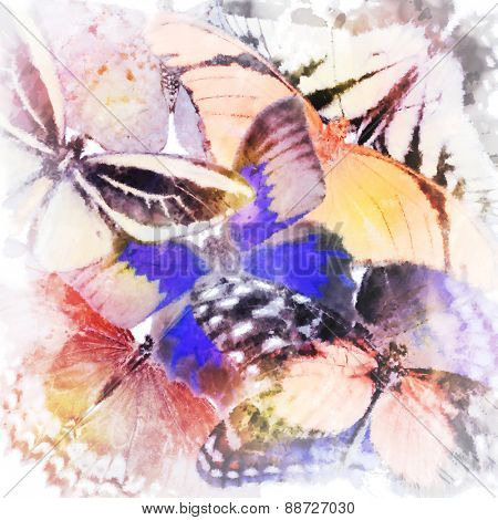 Digital Painting Of Butterflies Close Up