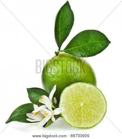 Lime citrus fruit flowering close up isolated on white background