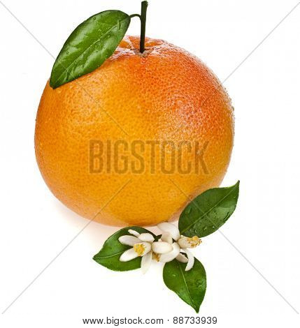 one citrus grapefruit with leaves close up isolated on white background