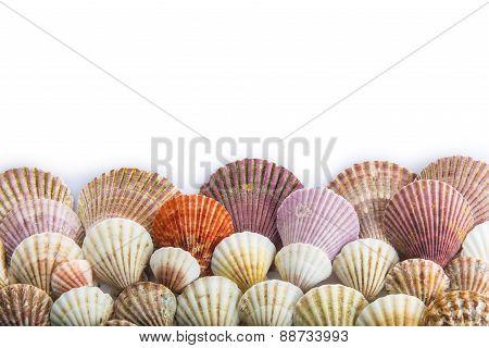 Seashells Isolated On A White Background
