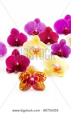 Set of colorful orchid