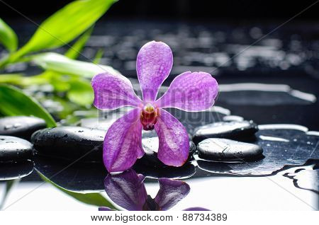 Pink orchid and stones with green leaf