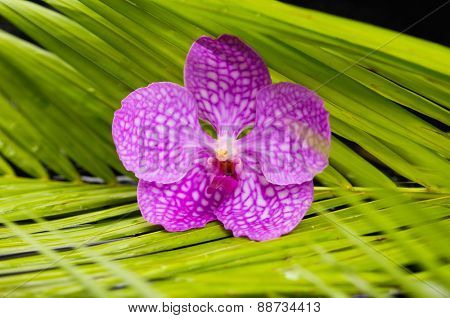 Macro of pink orchid and green leaf background