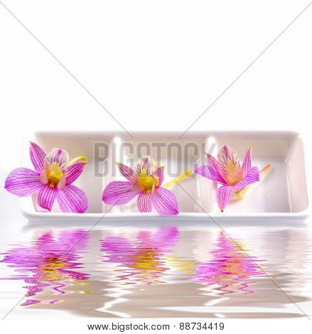 Three pink orchid flower in bowl with reflection