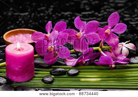 Red orchid and stones with bamboo grove on wet background
