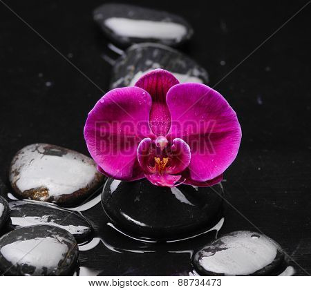 Still life with red orchid and pebbles