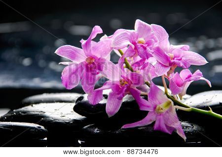 tranquil spa scene-pink orchid with black stones