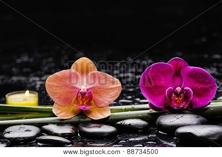 spa concept �¢�?�?two orchid with green plnt with candle ,stones