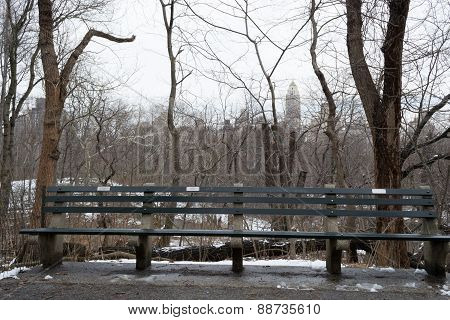 Bench In Central Park