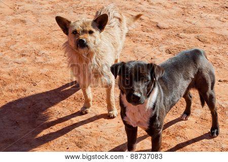 Southwestern Dogs