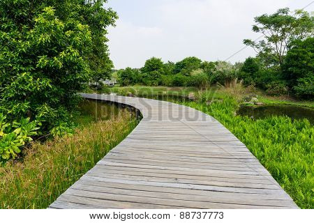 Wooden bridge in tropical rain forest