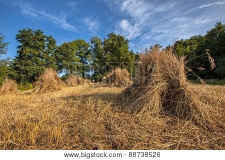 Haystack Of Buckwheat