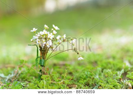 Wild Flowers On The Grass