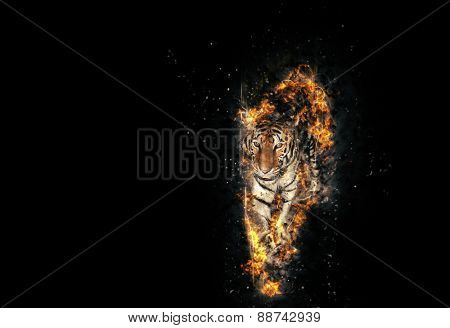 Blazzing tiger over black background