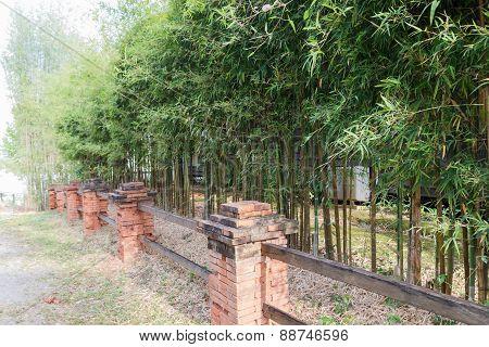 Row Of Bamboo Tree