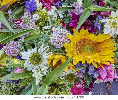 variety of colorful flowers close up
