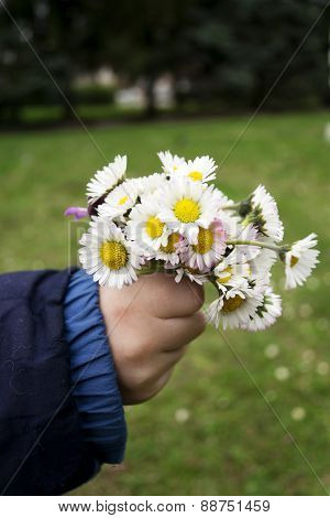 Daisies In Hand