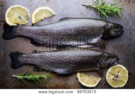 Ttrout On Metal Table