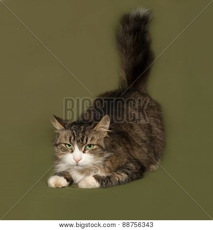 Fluffy Tabby And White Cat Lying On Green
