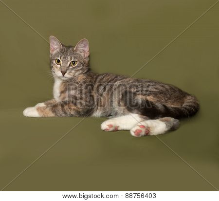 Tricolor Striped Cat Lies On Green