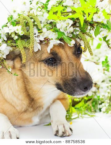 Dog And Spring Flowers