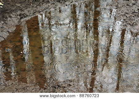 Ripples From Rain Puddles .