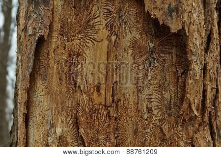Dry Wood Surface.