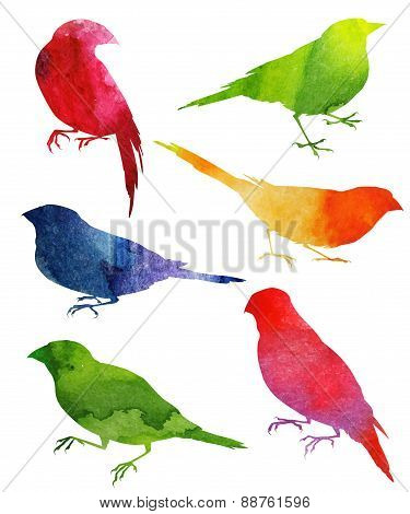 Birds Silhouette. watercolor illustration