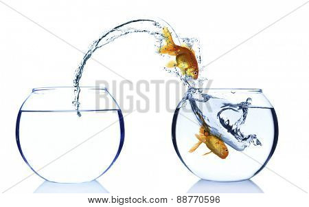 Goldfishes in aquarium isolated on white