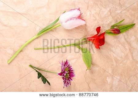 Different flowers on paper background