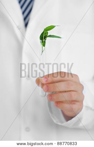 Man holding test tube with leaves, close up