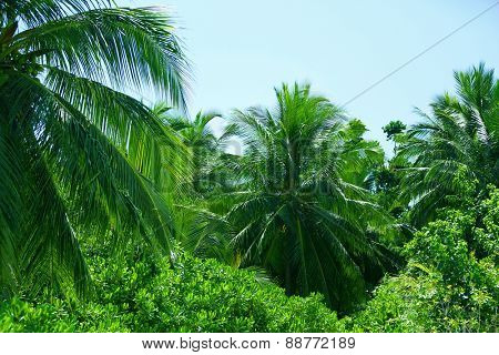 Green leaves of exotic palms