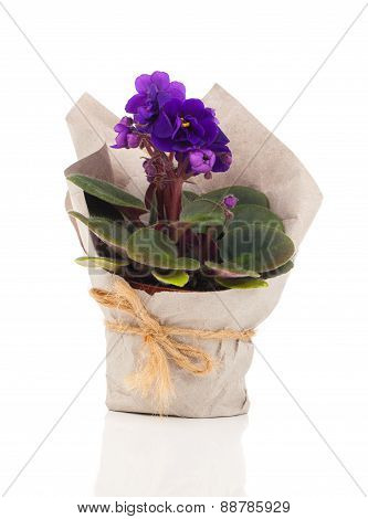White Saintpaulia Flowers In Paper Packaging