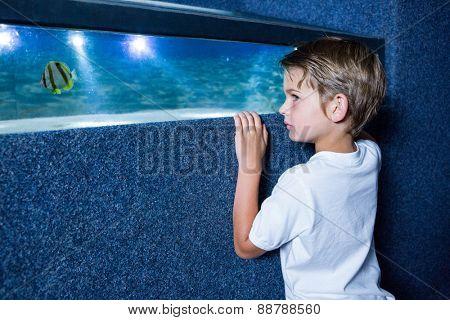 Young man looking at fish in a small tank at the aquarium