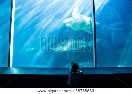 Young man pointing a shark with his hand at the aquarium