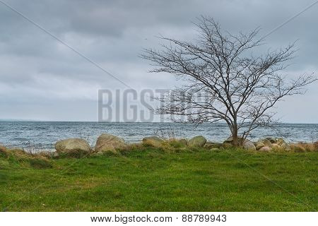 Lonely Leafless Tree at Seashore