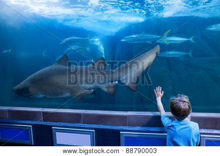 Young man touching a tank with fish and shark at the aquarium