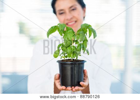 Scientist holding basil plant in laboratory