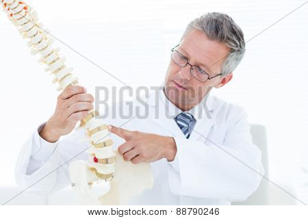 Doctor pointing anatomical spine in clinic