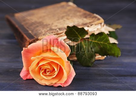 Tea rose with old book on color wooden table background